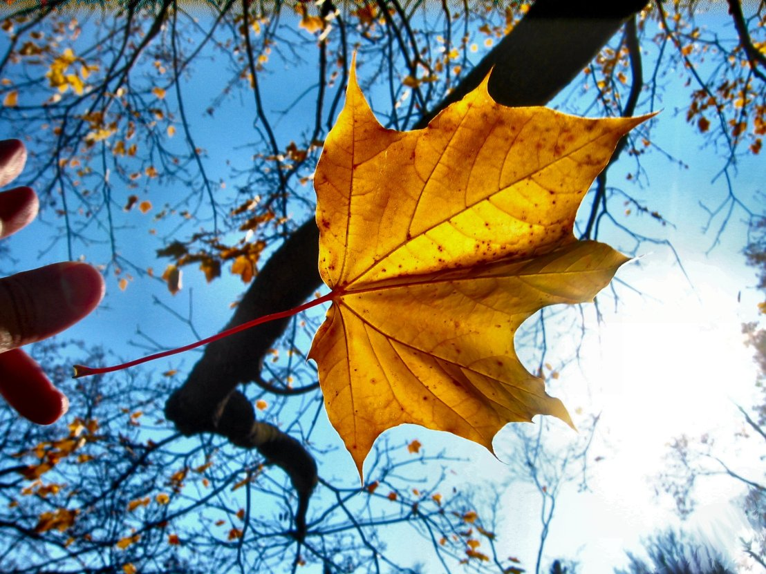 leaf-in-the-wind